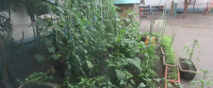 市川保育園の給食(1)食育